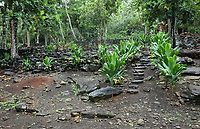 Marae Te Ana, or Matairea Huiarii, with steps leading up to an area with the tomb of 3 chiefs buried in the 16th century, at the archaeological site at Maeva village, on Huahine-Nui on the island of Huahine, in the Leeward Islands, part of the Society Islands, in French Polynesia. This area includes marae, agricultural terraces and houses, with a settlement of 900 AD and structures from 14th - 17th centuries. Maeva is thought to be an abandoned royal settlement, with many megalithic structures including marae, houses, agricultural structures, stone fish traps and fortification walls. Picture by Manuel Cohen