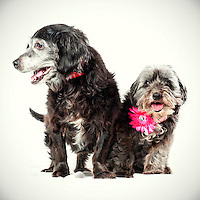 Sunrize and Shade are a pair of senior dogs who have been together 12 years. They are a bonded pair and just got adopted together