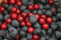 Wild blueberries and rowan berries.