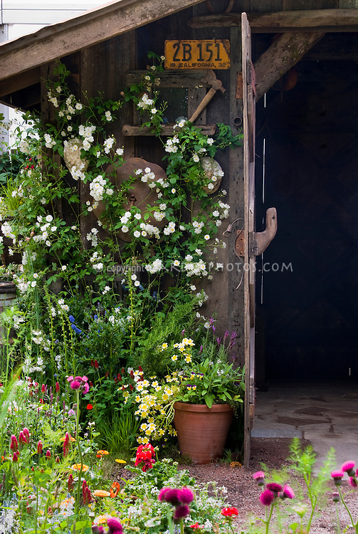 Landscaping An Old Garden Shed Plant Flower Stock