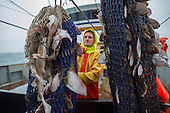 Fish in net of Dutch fishing vessel