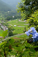View from the hillside near Kamikatsu, Katsuura, Tokushima Prefecture, Japan, July 7, 2014. The Irodori Project is based in the mountain town of Kamikatsu, Tokushima Prefecture. Farmers - many of them elderly - grow leaves and flowers to use to decorate Japanese food in restaurants and hotels across the nation.