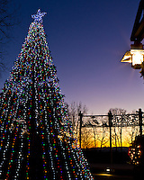 The Ridgefield, WA town Christmas tree is lit up in Overlook Park at sunset on a clear Winter night with tree silhouttes and metal sculptures in the background.