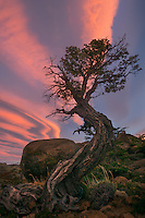 A gnarly old tree sits atop a small ridge as the last glow of sunset fades into the evening.