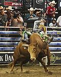 2009 PBR Bulls