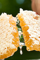 Close up of honeycomb being broken in half with honey dripping from the center.