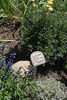 Sign in the garden Don't just stand there... Weed! funny humor with cute whimsical face ornament, annuals Salvia farinacea, Euphorbia, weeding,