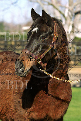 Lucky Spell, age 33, at Magali Farms, California.  © January 2004 Barbara D. Livingston. All rights reserved. easygoer78@aol.com