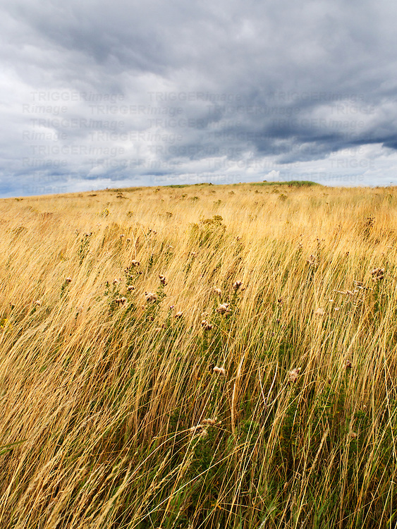 Dune Grasses under a Dark Sky near Amble Northumberland England