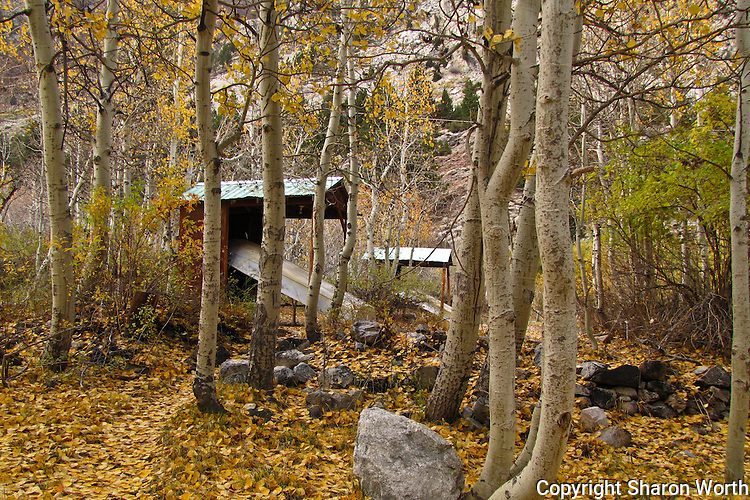 A carpet of leaves surrounds boat storage shelters at Lundy Lake in the Sierra Nevada Mountains.
