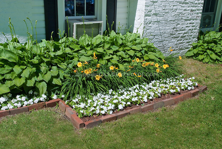 Hemerocallis Stella d'Oro daylilies, Impatiens, Hosta next to house foundation plantings for perennials and annuals flowers
