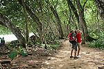 Tourists Animal Watching, Cahuita National Park, Cahuita, Costa Rica