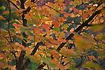 Fall color inside Zion National Park in Southwestern Utah.