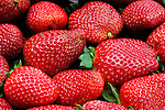 Freshly picked strawberry. Food background.