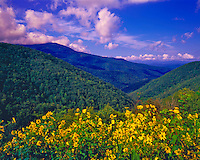 Sunflowers & Southern Applachians on a Rare Clear Day after a Summer Storm, Highest point East of the Mississippi,  Mount Mitchell, North Carolina