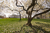 The White House, Washington D.C., U.S.A.