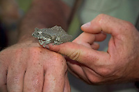 KLASERIE PRIVATE GAME RESERVE, SOUTH AFRICA, DECEMBER 2004. Gary finds a treefrog. Wildlife guide Gary Freeman takes people on walking safaris in the bush. Photo by Frits Meyst/Adventure4ever.com