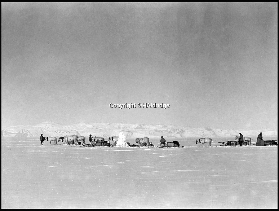 BNPS.co.uk (01202 558833)<br /> Pic: HAldridge/BNPS<br /> <br /> Pony sleds on the vast featureless Ross Ice Shelf.<br /> <br /> Poignant unseen photographs taken by Lt Bowers of Scott's ill-fated 1912 Antarctic expedition have come to light. <br /> <br /> Bowers perished with Scott on their return from the South Pole, but these photographs taken by him were returned to Britain with expedition photographer Herbert Ponting.<br /> <br /> They show the team with their dogs and ponies on the Ross Ice Shelf preparing for their doomed departure for the Pole.