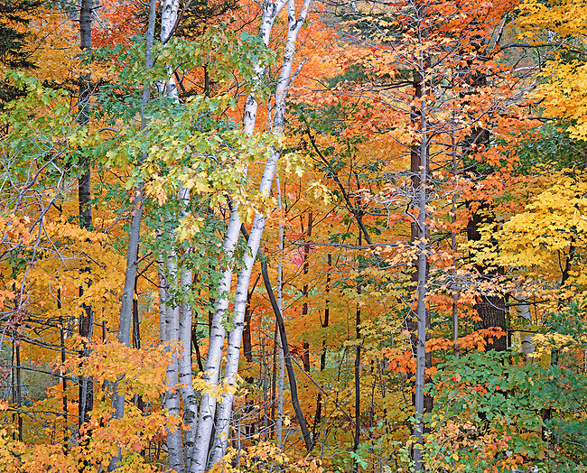 autumn in White Mts. New Hampshire