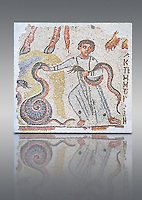 Roman mosaic of a Young boy playing with snakes, possibly an early Christian mosaic. Syria or Lebanon, 5th century AD. Cubes of marble and limestone. Dressed in a long tunic, the child playing with two snakes could be illustrating a passage from the Book of Isai (11.6 to 8). This fragmented mosaic panel once continued in upper part, as indicated by the animal hoofs, and to the right of the mosaic are remains of a Greek inscription. inv 5094. Louvre Museum, Paris
