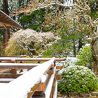 The snow covered railing of the Pavilion deck in the Portland Japanese Garden leads the viewer eye into the snow covered garden with Japanese Maples and azalea bushes with tall Douglas fir trees in the background.