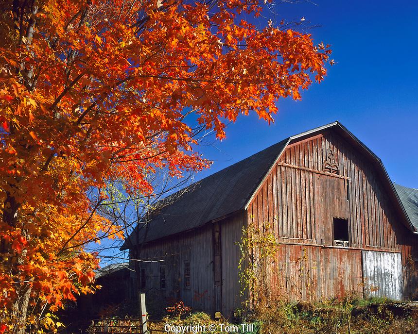 Barn in Autumn Morning Light, Finger Lakes Region, New York