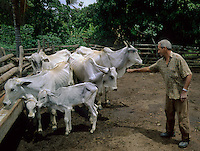 Small farmer watching his cattle feeding in Brazilian Highlands, Goias, Brazil