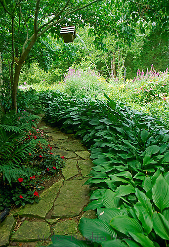 Shaded path through impatience and ferns looking out into bright sun garden