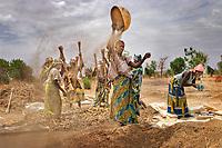 Winnowing Millet Harvest. Hadejia, Jigawa, Nigeria.