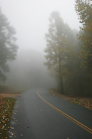 Foggy road on the Blue Ridge Parkway.