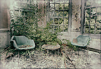 Two chairs by a window with plant growing in floor, derelict West Park Asylum, Epsom, Surrey, processed to emulate wet plate technique.