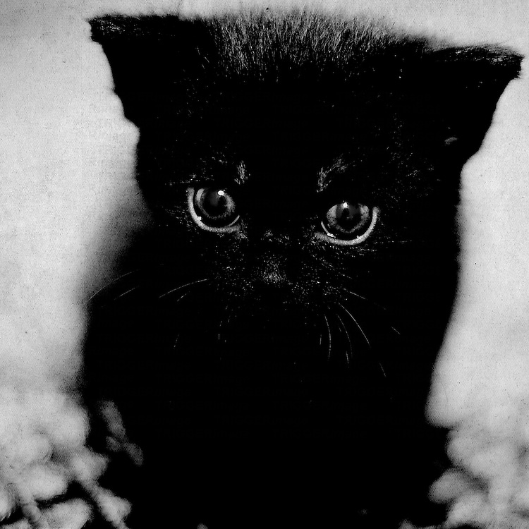 Black and white photo of a small sad looking black kitten.