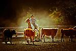Jeff Meyer rounding up the cows at Hidden Creek Ranch, Idaho.