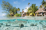 Fakarava Atoll, Tuamotu Archipelago, French Polynesia; an over under view of blacktip reef sharks in shallow turquoise water in front of the Tetamanu Village