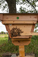 Top bar bee hive.