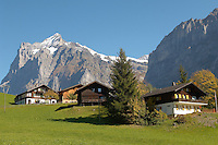 Swiss houses on high Alpine pastures looking towards the Wetterhorn - Grindelwald Switzerland