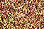Coffee beans drying near Liang Bua village, Manggarai, Flores.