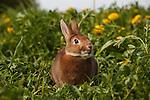 20120501 Rabbits Winona