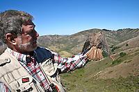 GGRO volunteer Nick Villa holds American Kestrel in the Marin Headlands
