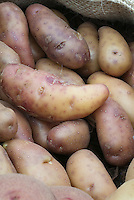 Potatoes Harlequin