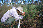 Hillary Cooley Cataloging Vegetation