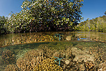 Split level of a shallow coral reef and mangroves.