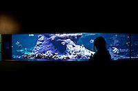 Cherbourg Cité de la Mer  Museo dedicato al mare , l'acquario, una bambina in controluce osserva i pesci
