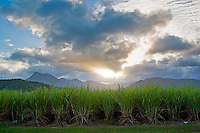 Sugar cane fields with Mount Demi in the background, Queensland, Australia