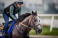 HALLANDALE BEACH, FL - JAN 27: Arrogate, with Dana Barnes aboard gallops at Gulfstream Park Race Course on January 27, 2017 in Hallandale Beach, Florida. (Photo by Alex Evers/Eclipse Sportswire/Getty Images)