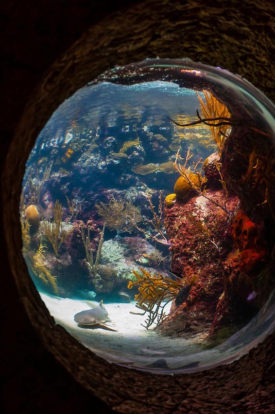 Coral Reef Aquarium, Xcaret Park (Eco-archaeological Theme park), Riviera Maya, Quintana Roo, Mexico