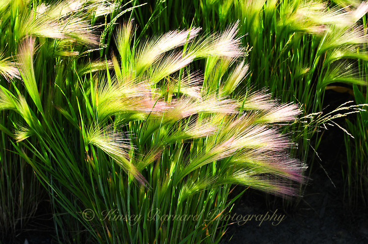 &quot;BLOWING IN THE WIND&quot;<br />
