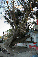 Quintana Roo, Mexico. Wednesday, August 22, 2007. An uprooted tree feel on a roadside store, part of the damage wrought by Hurricane Dean in the town of Limones 65 km from the city of Chetumal.