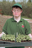 Young man with Downs Syndrome carrying seed tray at work on community allotment project. MR