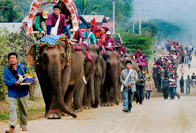 Asian elephants (elephas maximus)and their mahouts at the Elephant Asia festival in Pak Lai, Laos are going to the elephant Bassi  where the spirits are encouraged to stay with the elephant to keep them healthy.